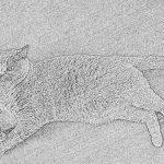 Schreiben für die Katz